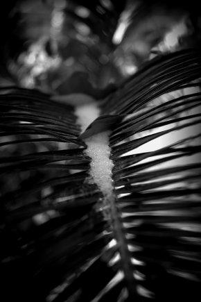 Frosty Palms